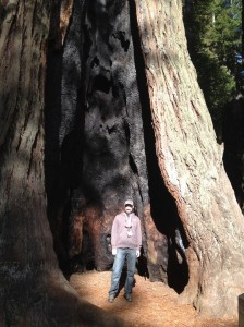 Representing PyCon in the redwoods